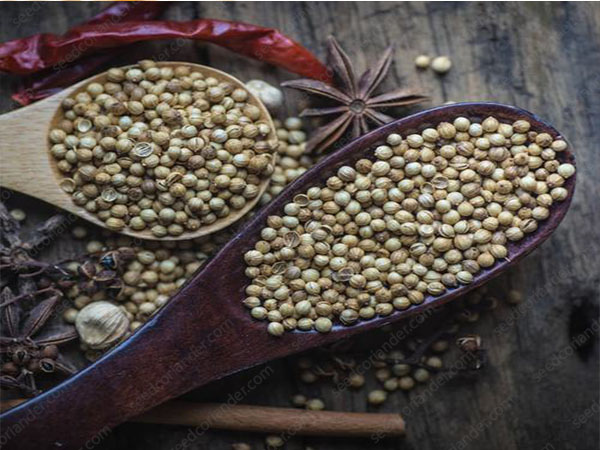 rate Sell Coriander Seed Top Quality