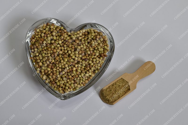 Where to buy Indian Coriander seeds from Suppliers?